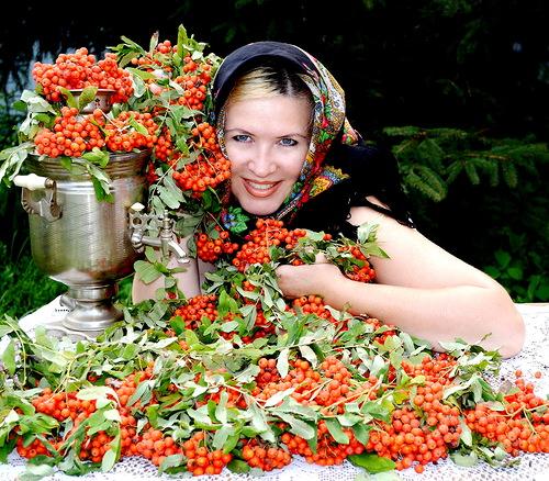 Иван-чай — самый полезный чай